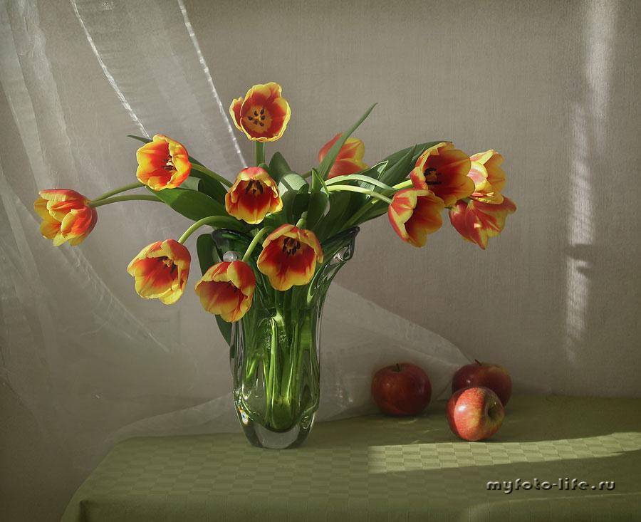 Люблю тюльпаны...