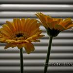 Альбом Цветы