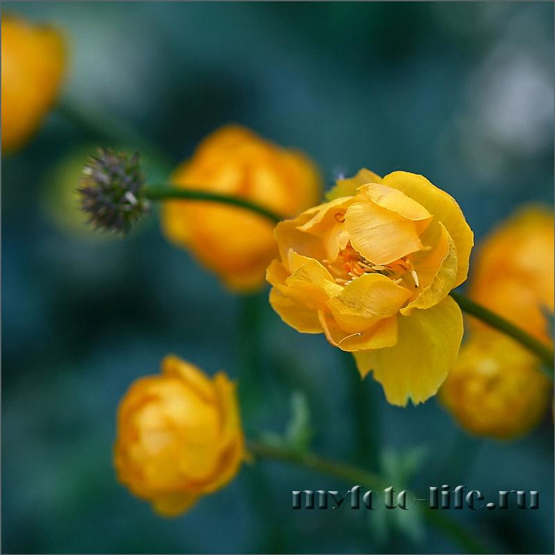Цветы из путешествий