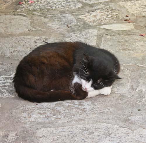 Разомлевший от жары кот