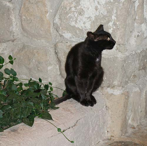 Кошка-пантера