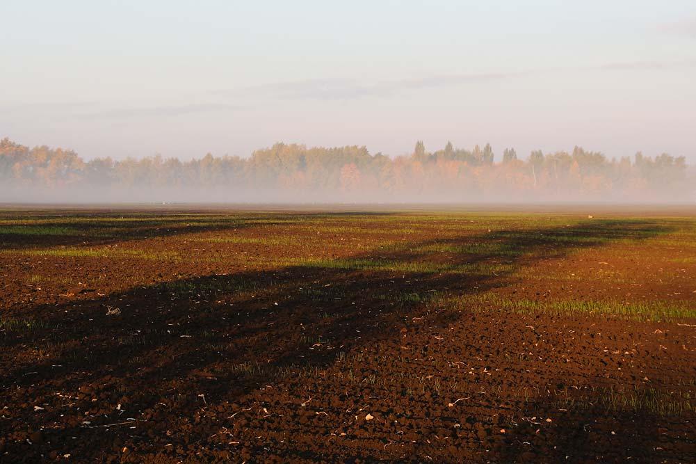 Утро в Воронежской области